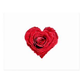 Rose Heart Postcard