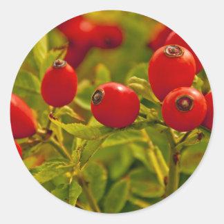 Rose Hip Classic Round Sticker