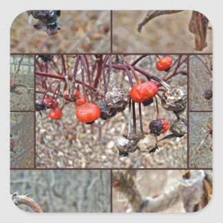 Rose Hip Collage Square Sticker