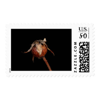 Rose Hip Postage