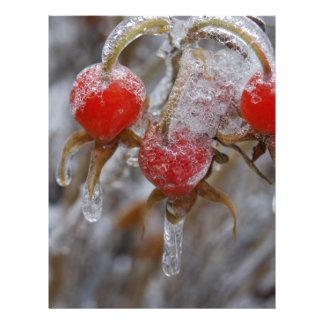 Rose Hips Under Ice Letterhead