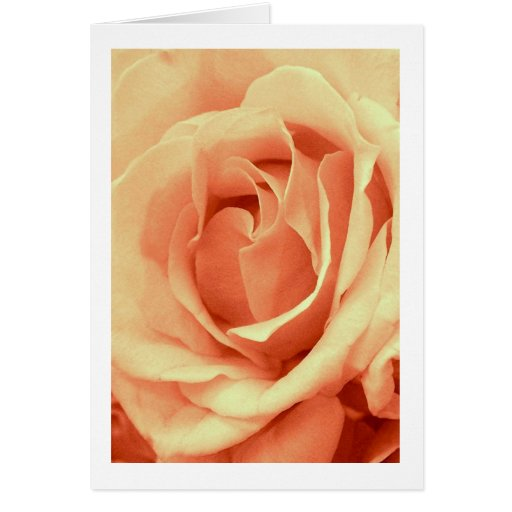 "Rose in ""Ballet Pink"" Card"