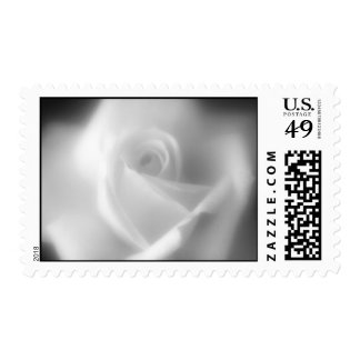 Rose in Black and White Postage