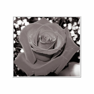 Rose in black, white & gray cut out