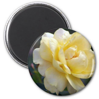 Rose in Bloom 2 Inch Round Magnet