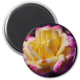 Rose in Bloom Magnet