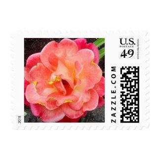 Rose in Bloom Postage