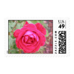 Rose in Bloom Stamps