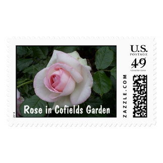 Rose in Cofields Garden Postage Stamp