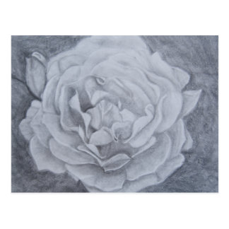 Rose in Graphite Postcards