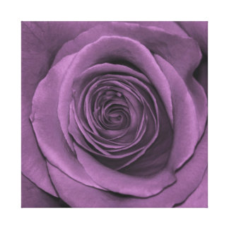 Rose in Lavender Stretched Canvas Prints