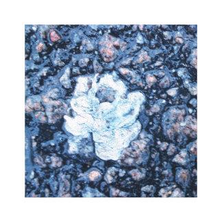 Rose in the asphalt canvas print