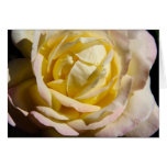 Rose in Yellow and Pink Greeting Card
