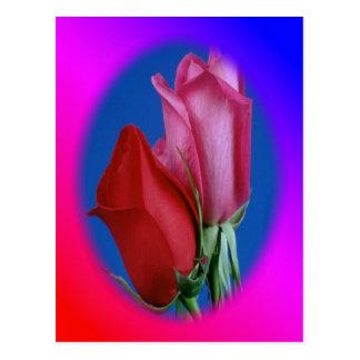 Rose kiss post card