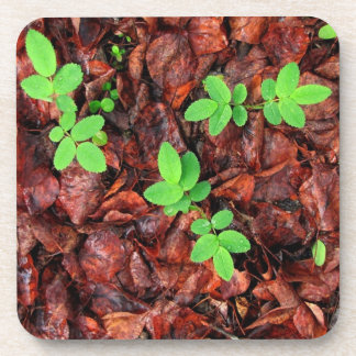 Rose Leaves; No Text Drink Coaster