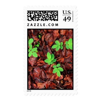Rose Leaves; No Text Postage Stamps