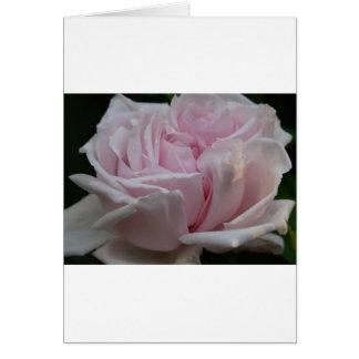rose,light pink 2 card