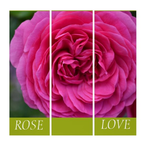 Rose Love Triptych
