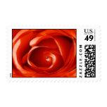 Rose Macro - Postage Stamp