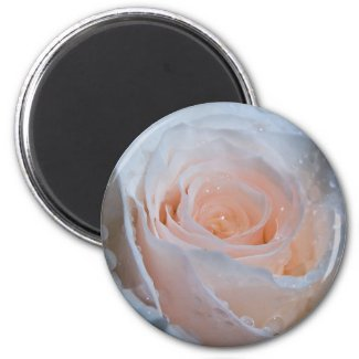 Rose Magnet 1 magnet