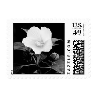 Rose Mallow Postage - B&W