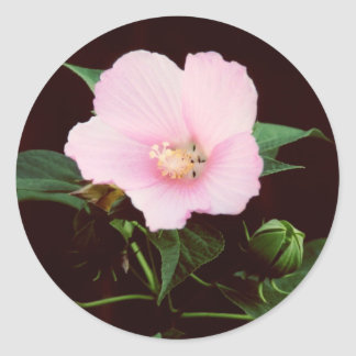 Rose Mallow Stickers