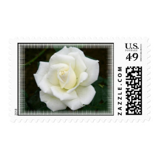 Rose Meanings Postage Stamp
