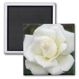 Rose Meanings Square Magnet