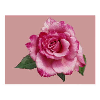 Rose Miniature Gift Postcard