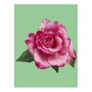 Rose Miniature Gift Postcard