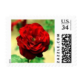 Rose National Flower (United States) Postage