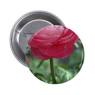 Rose Of Care Pinback Buttons