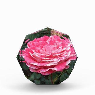 Rose of Love Award