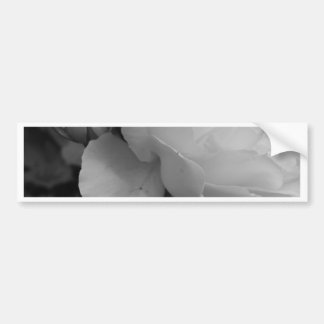 Rose of Love B/W Bumper Sticker