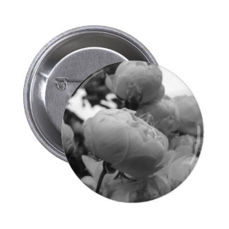 Rose of Love B/W Pinback Buttons