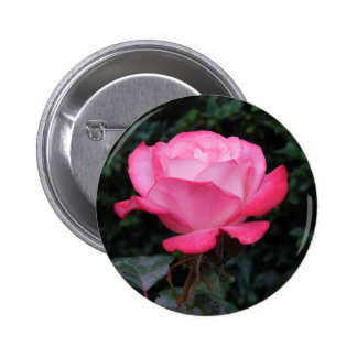 Rose of Love Pins