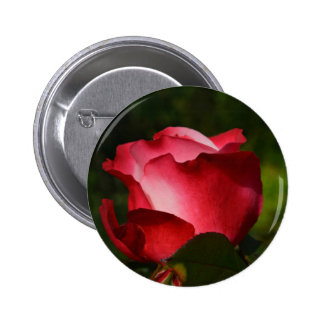 Rose of Love Pinback Button