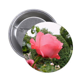 Rose of Love Button
