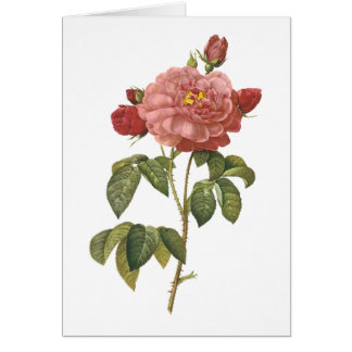 rose of Orleans by Redouté Greeting Card