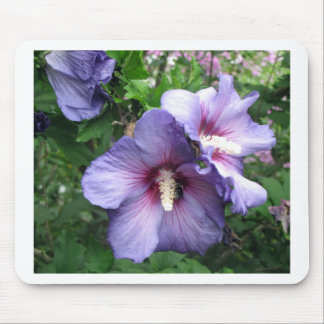 Rose of Sharon Bee Pollen Mouse Pad