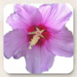 Rose of Sharon Beverage Coasters