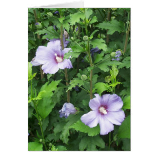 Rose of Sharon Hibiscus Flowers Card