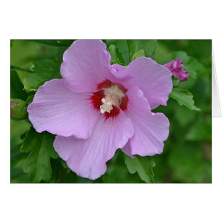 Rose of Sharon Note Card