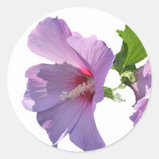 Rose of Sharon Sticker
