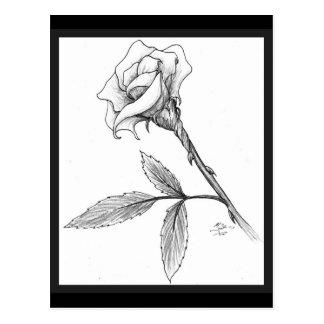 Rose of sorrows postcard