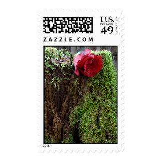 Rose on a stump postage