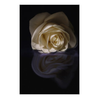 rose on reflection poster