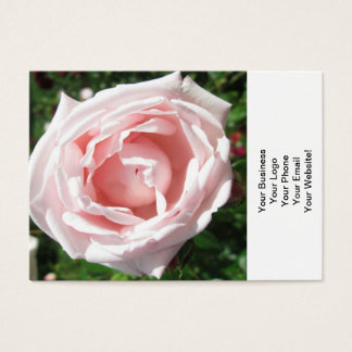 Rose Opening Sunlight Business Card