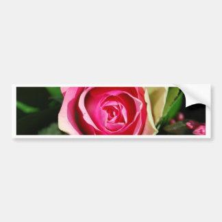 Rose Pedals Bumper Stickers