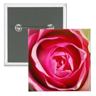Rose Pedals Pinback Button